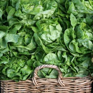 Lettuces & Leafy Greens